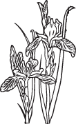 Clipart Image For Gravemarker Monument flower 33